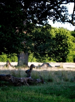 The Breite Ancient Oak Tree Reserve